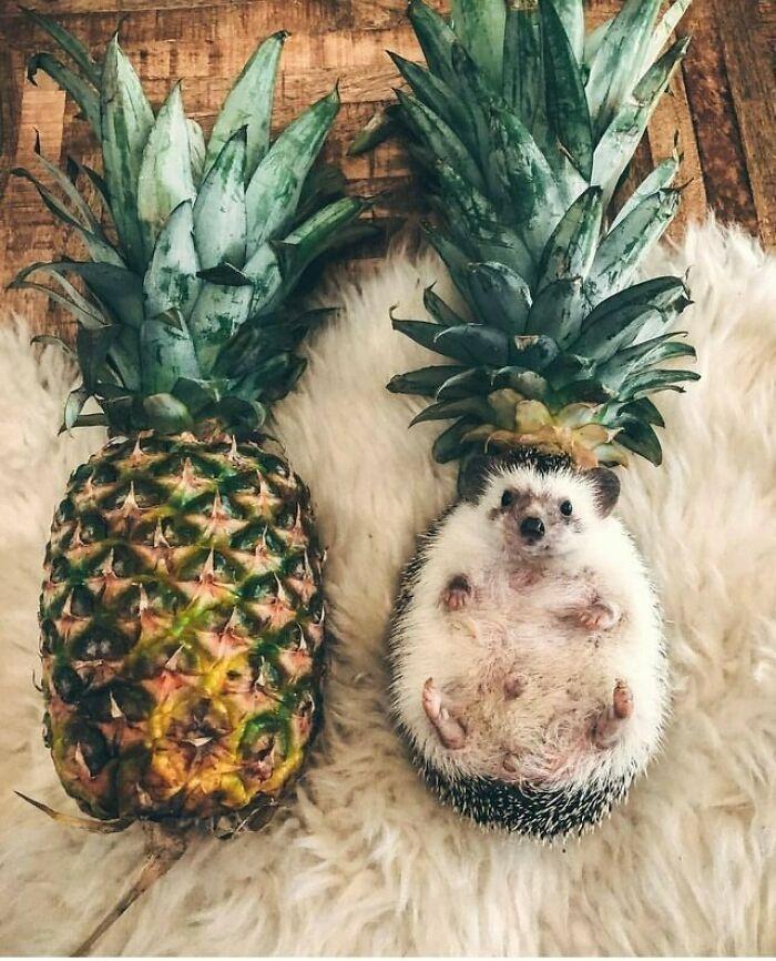 ананас и еж