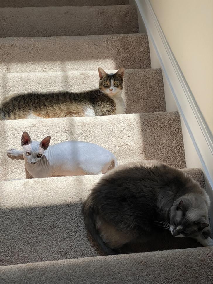 коты лежат на ступеньках