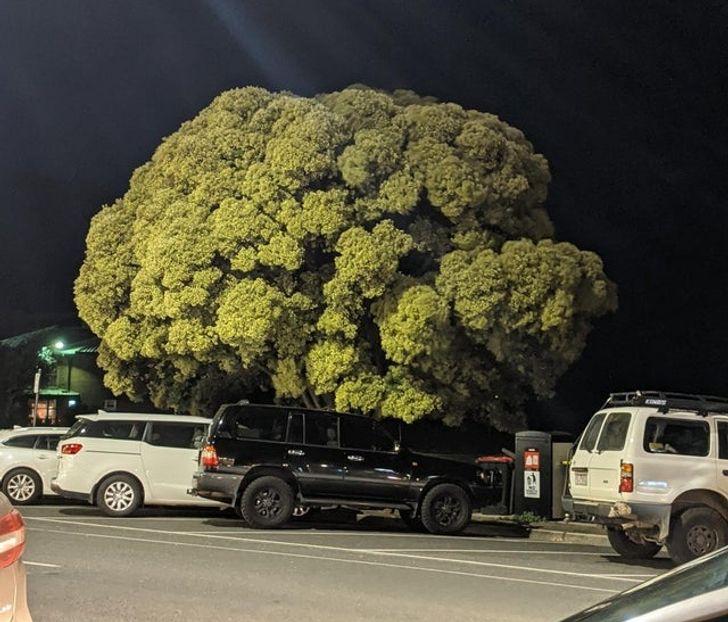 машины под деревом