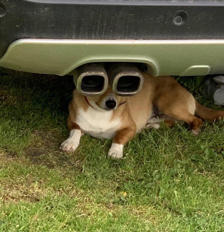 собака лежит под машиной