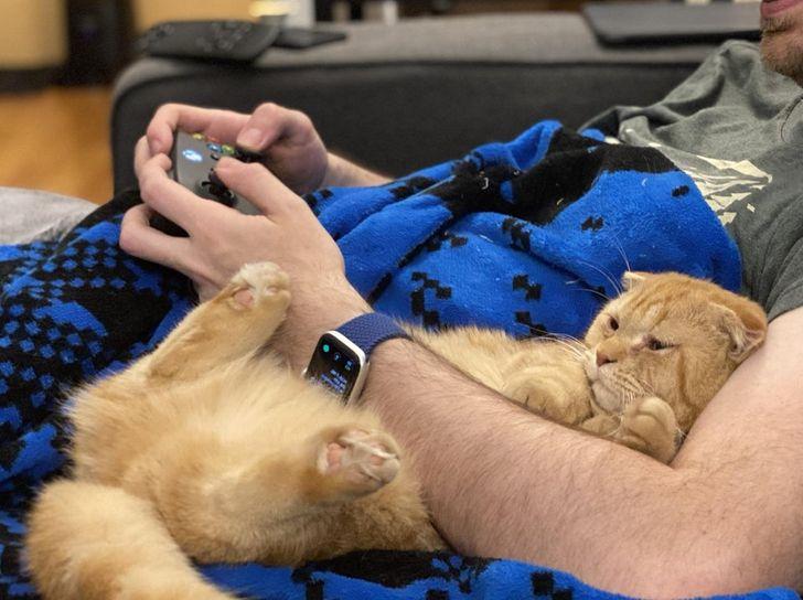 парень в обнимку с рыжим котом