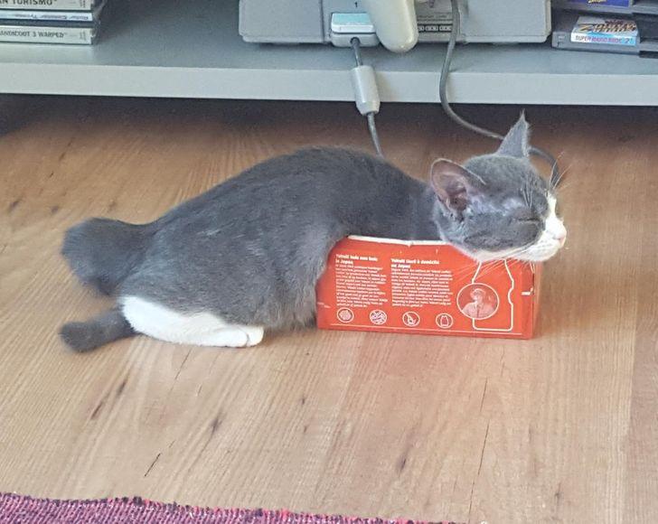 серая кошка спит в коробке