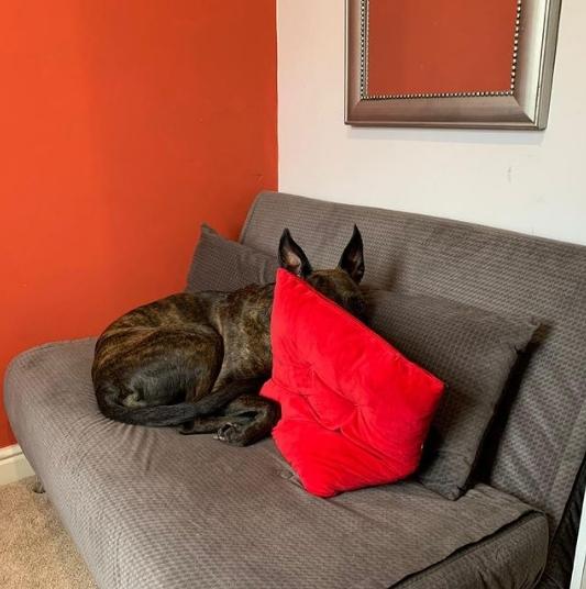 собака сидит на диване за красной подушкой