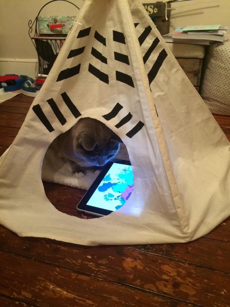 кот смотрит планшет в палатке