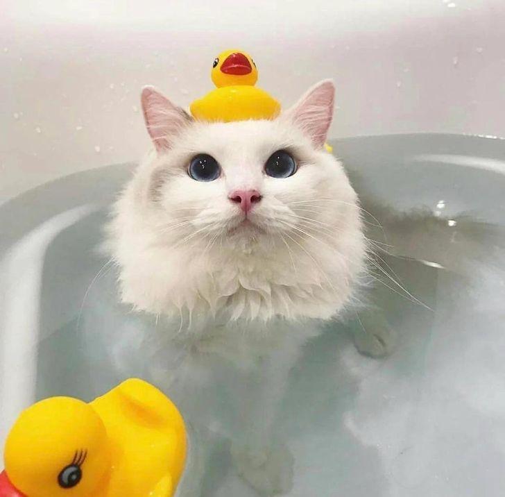 белая кошка в ванне с водой