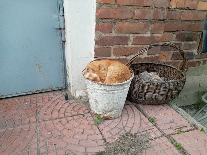рыжий кот спит в ведре