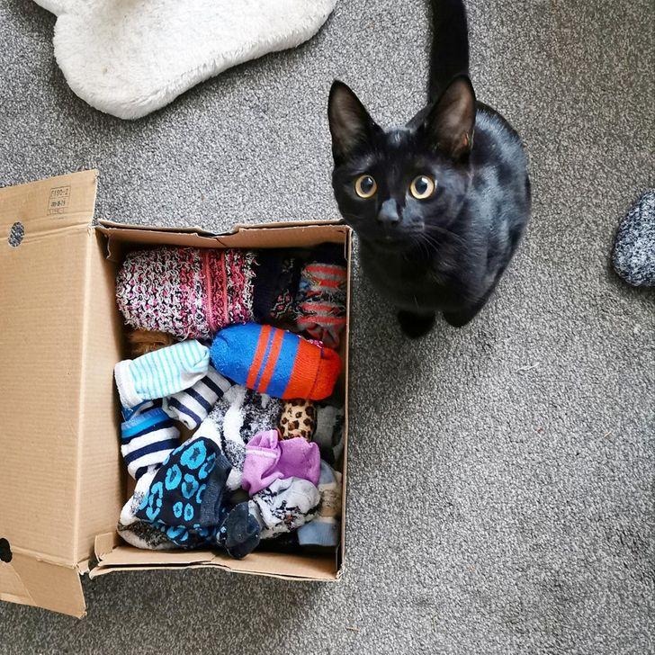 черная кошка и коробка с носками