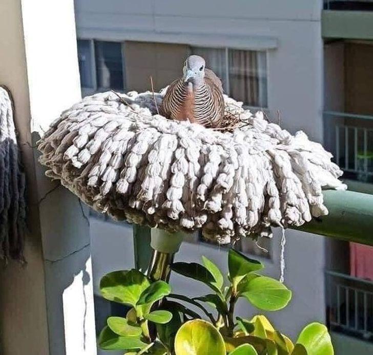 птица сидит на швабре