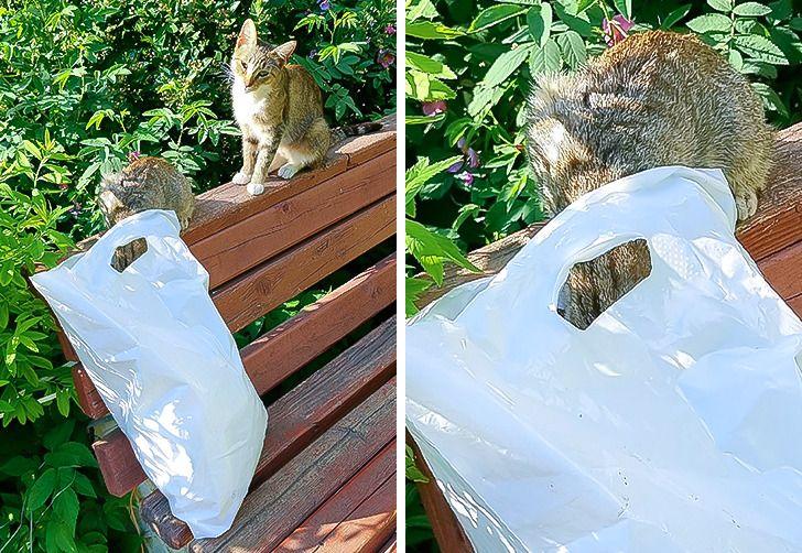 коты на лавке осматривают пакет