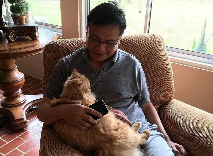 мужчина сидит в кресле с рыжей кошкой на руках
