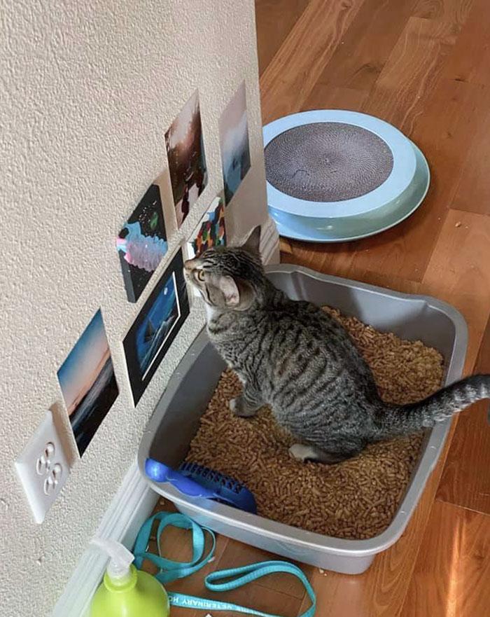 полосатый кот сидит в лотке