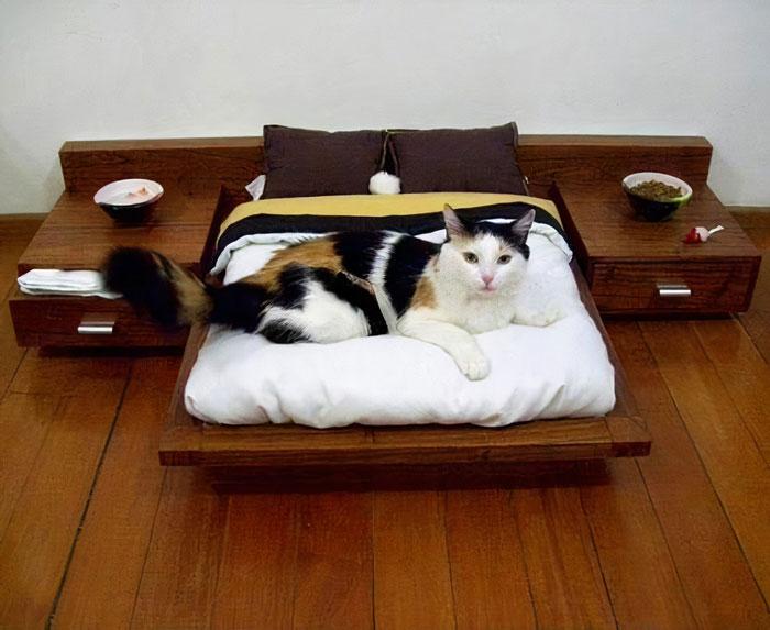 трехцветная кошка лежит на кровати