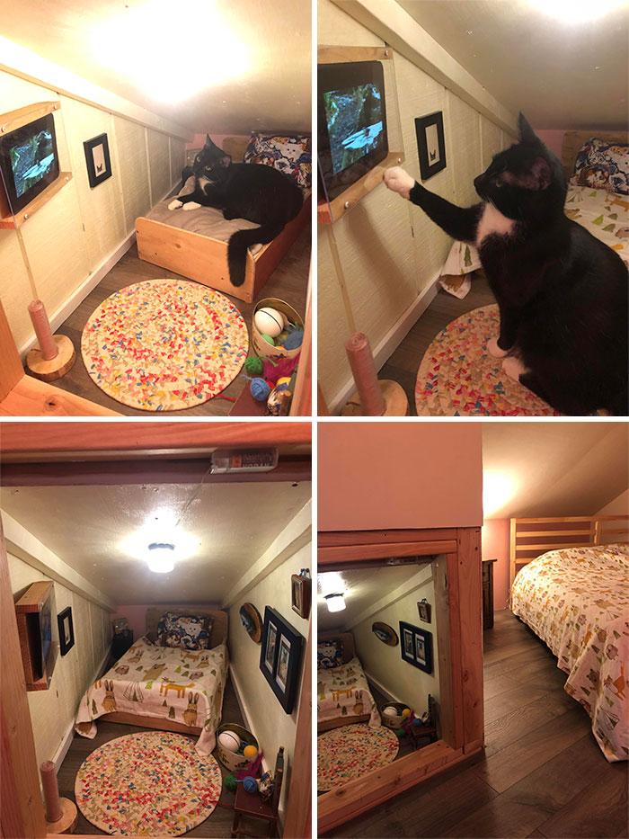 черная кошка в мини-комнате
