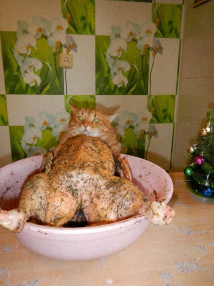 курица в маринаде и рыжий кот
