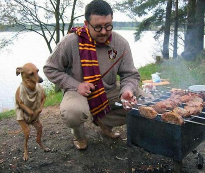 собака стоит на задних лапах возле мужчины, жарящего шашлык