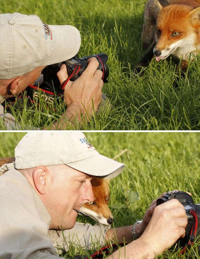 мужчина фотографирует лису