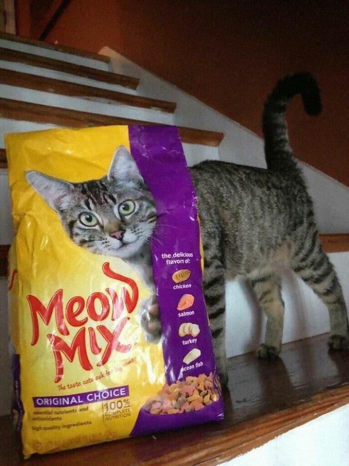 полосатый кот и пакет корма