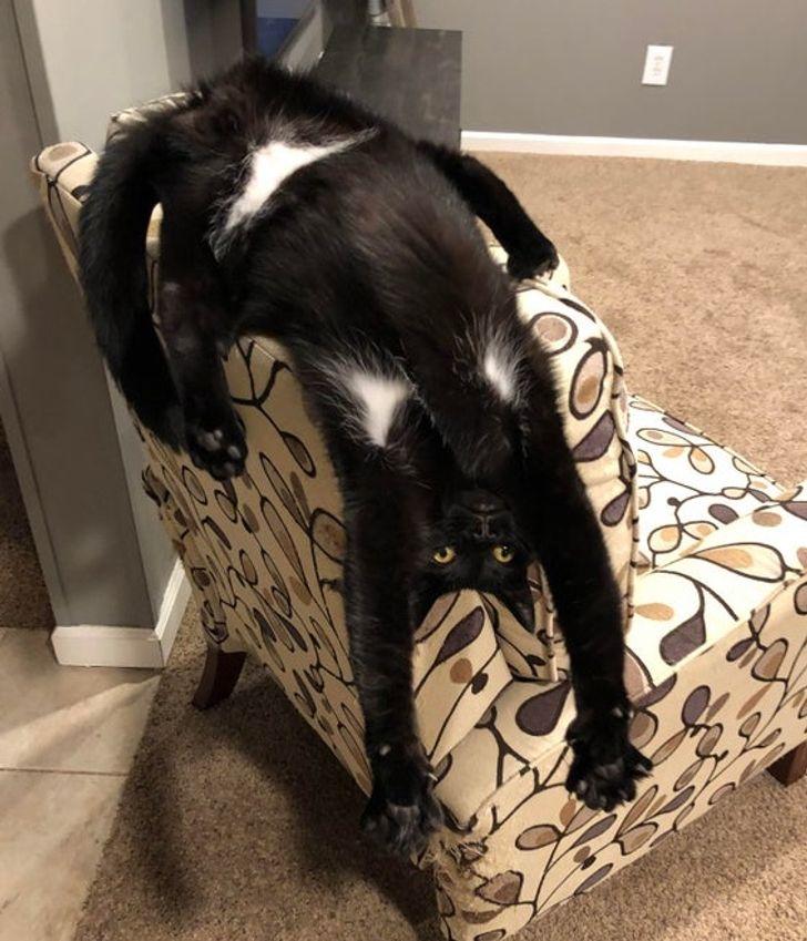 черный кот свисает со спинки стула