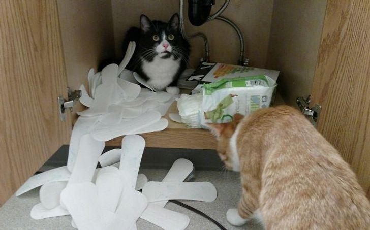 две кошки разорвали упаковку с прокладками