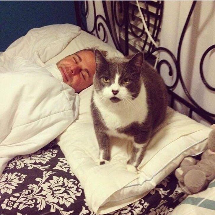 кот сидит на подушке рядом со спящим парнем