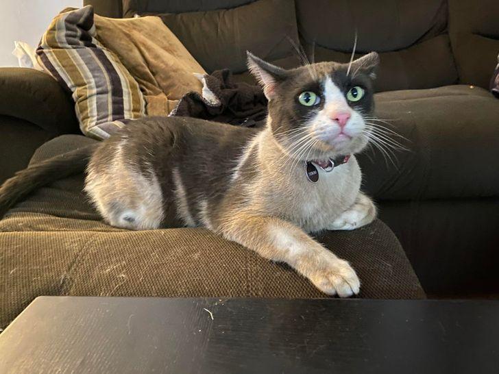 грязный кот на диване