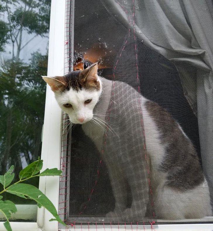 кот торчит головой из сетки в окне