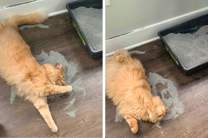 рыжий кот катается в песке из лотка