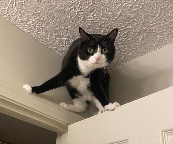 черно-белая кошка сидит наверху двери