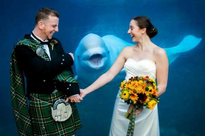 жених, невеста и белуха в аквариуме