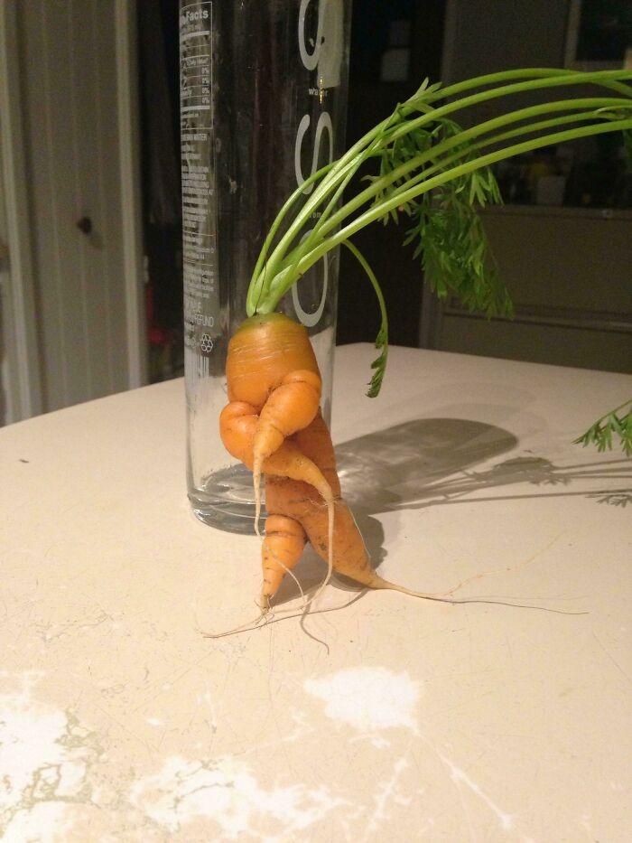 морковка с хвостом
