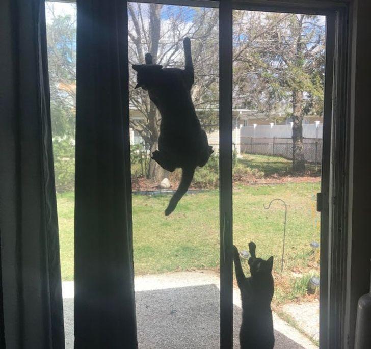 кот висит на сетке