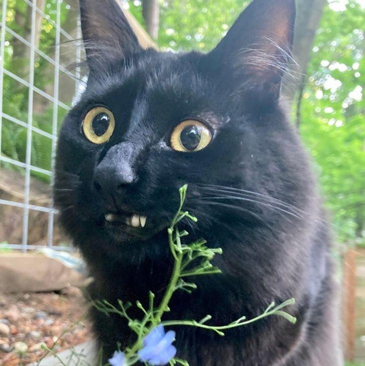 черный кот на улице