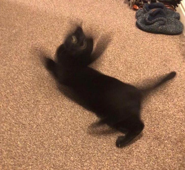 черный кот на полу