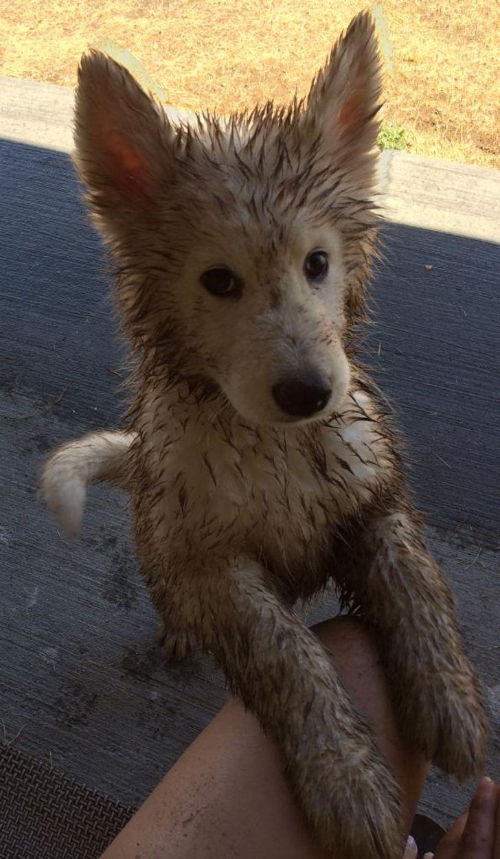 щенок в грязи