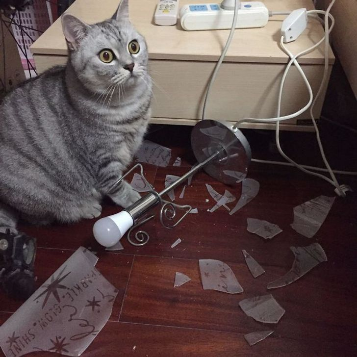 серый кот сидит у разбитой лампы