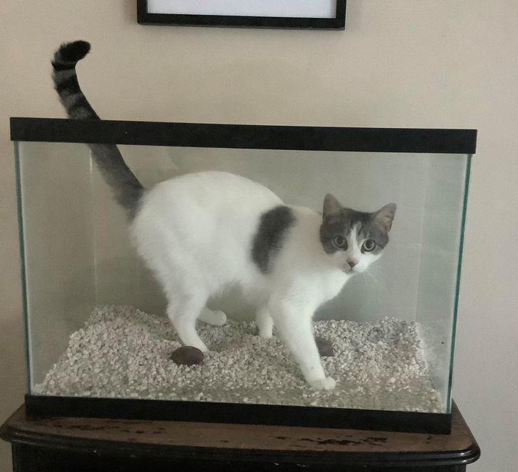 кот стоит в пустом аквариуме