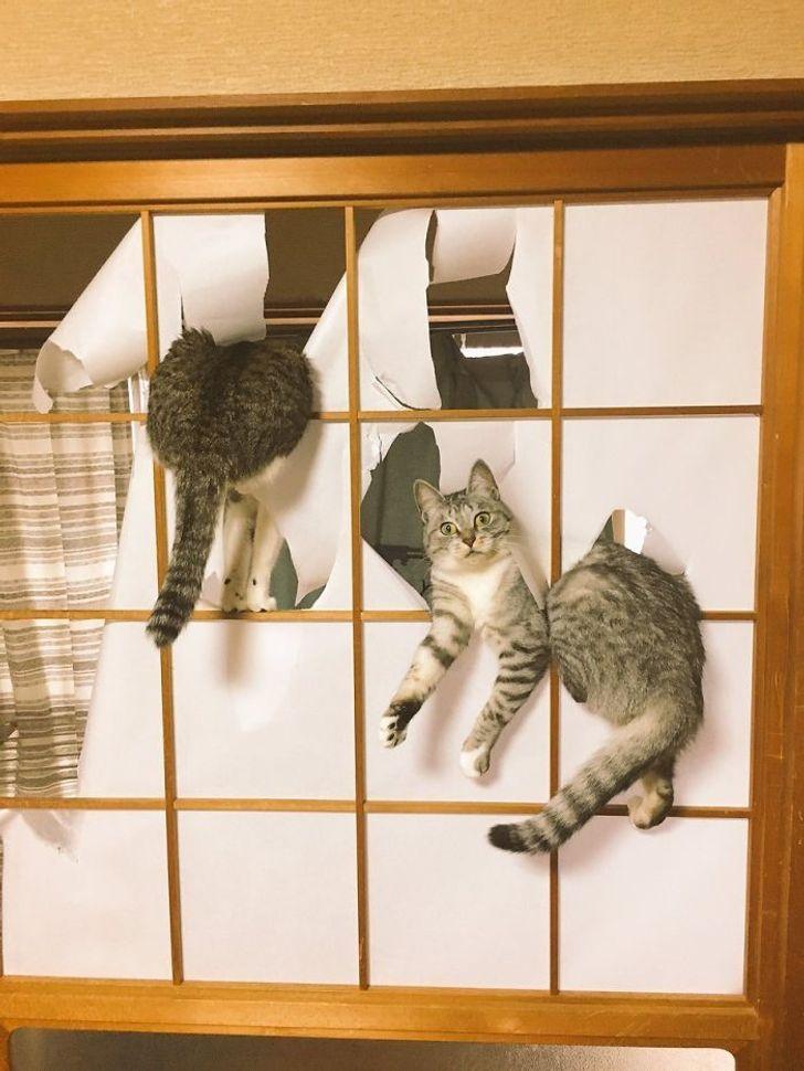 10+ котов, которые чихать хотели на ваши правила