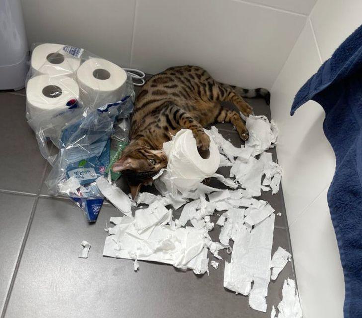 кот кромсает рулон туалетной бумаги