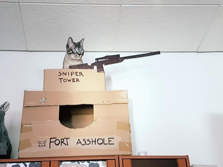 кот сидит на башне из коробок