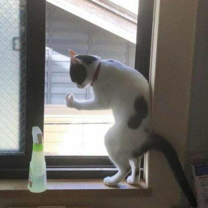 кот стоит на задних лапах на подоконнике