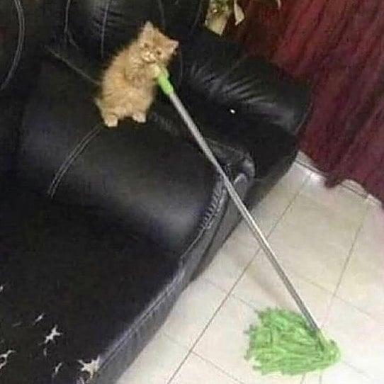 котенок со шваброй на диване