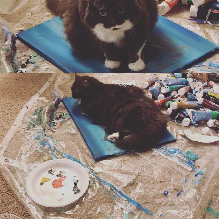 черно-белый кот лежит на красках