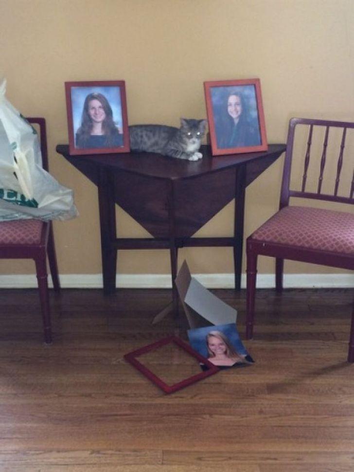 кот лежит на столе с фотографиями в рамках
