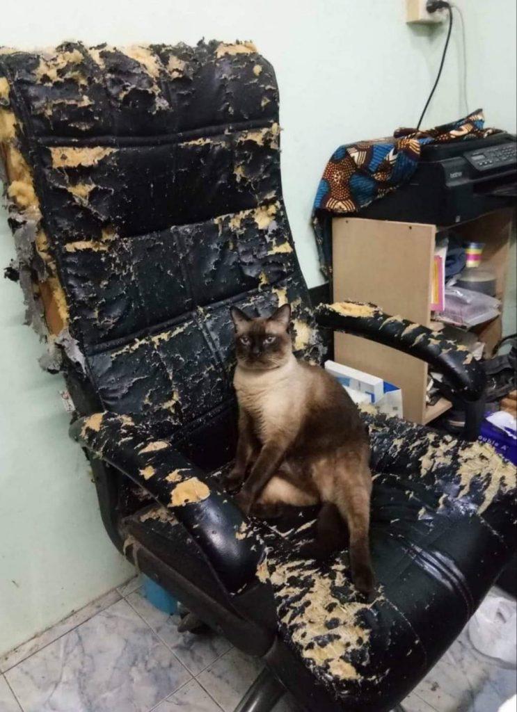 15+ фото котов, которые подарят вам дневную дозу умиления contextkittensTwitterИ, котов, которые, умиления, удивительные, нравится13, питомца©, contextkittensTwitterКажется, очень, кресло©, Персональное, потягушек12, contextkittensTwitterСразу, видно, хозяин, давно, сдался14, Маскировка, лучше, летней
