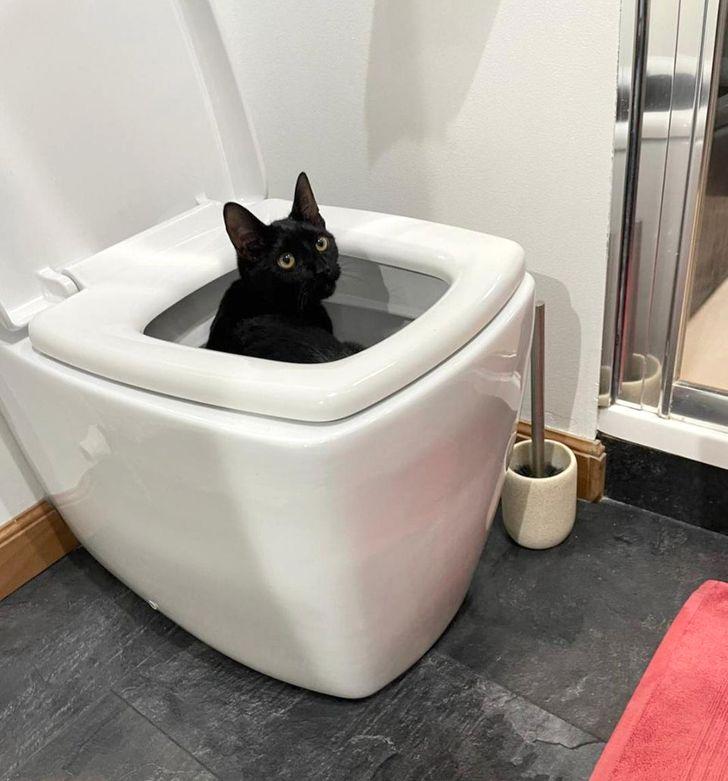 черный кот сидит в унитазе