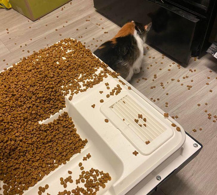 кошка и рассыпанный корм