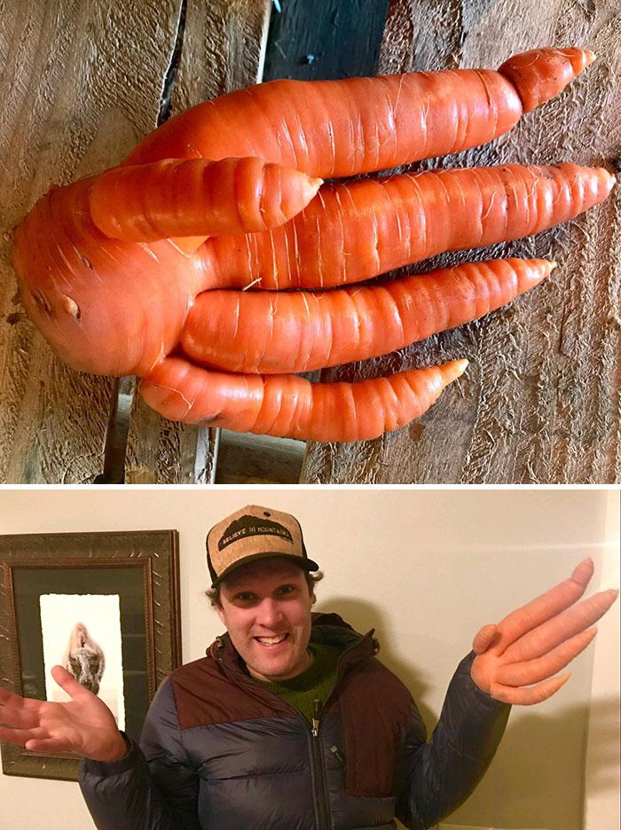 морковь в виде руки