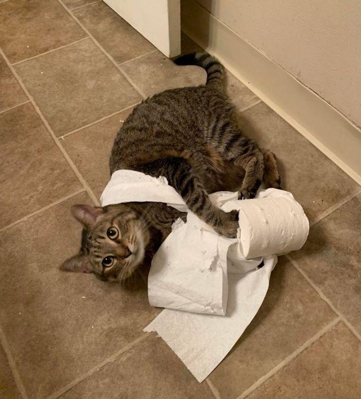 15 жизненных правил котов, по которым они живут и нас приучают