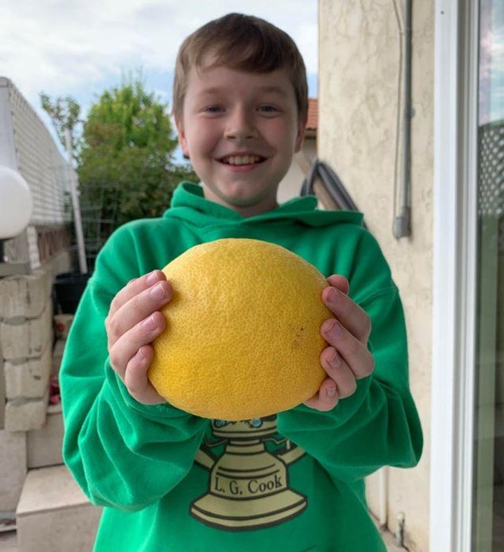 мальчик держит в руках лимон
