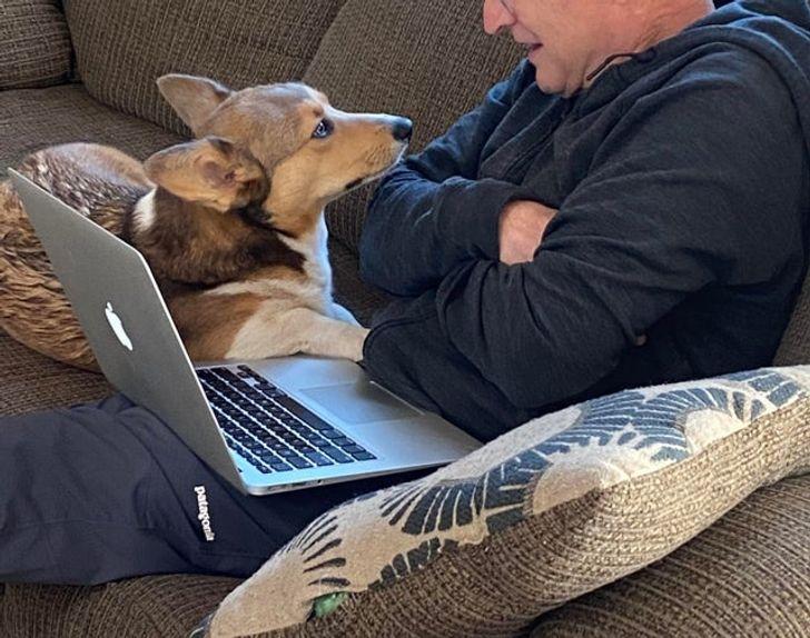 мужчина с ноутбуком и собакой
